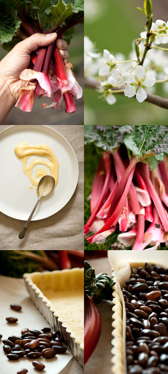 rhubarb, tart dough and pastry cream
