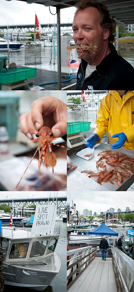 spot prawns at False Creek, Vancouver