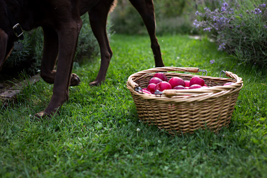 plums and a dog