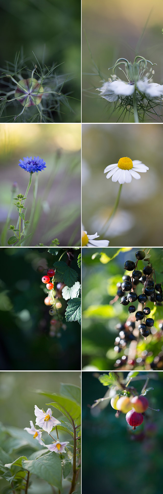 summer_flowers_berries